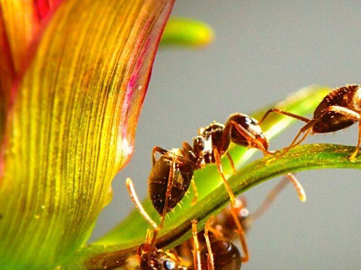 ANT automatiska negativa tankar