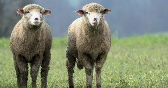 Hitta din tvillingkund - dubblera din framgång - Kicki Westerberg - Ekonomisk pt